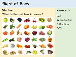 KS3 Plants - The Plight of Bees.pptx