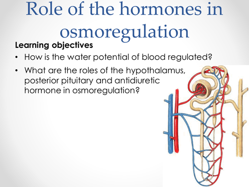 AQA A-level Biology (2016 specification). Section 7 Topic 17: 6 Role of hormones in osmoregulation