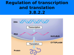 Regulation of transcription and translation_AQA_7402_Yr13