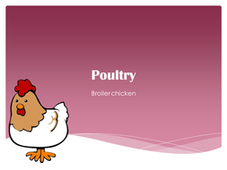 Agriculture: Poultry (Chickens) PowerPoint Presentations - Meat and Eggs