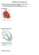 Coordination-of-Cardiac-Cycle-Notesheet.doc