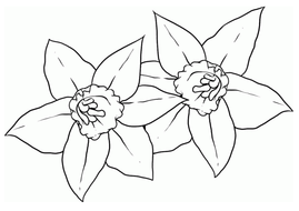 colouring-pages-daffodils.pdf