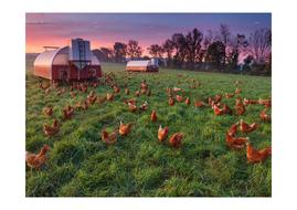 HfW-hidden-in-pictures-farm.docx