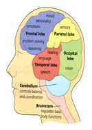 The Structure of the Brain (Part 1 of 2 Edexcel Biology 9-1)