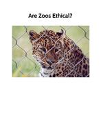 Big Write: Balanced Arguments Zoos Animals Year 6 Year 5
