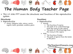 Reproductive-System-slide-show.pptx