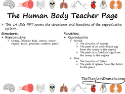 Reproductive-System-slide-show.pdf