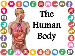 Image result for human body ks2