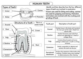 gcse human teeth worksheet by beckystoke teaching resources tes. Black Bedroom Furniture Sets. Home Design Ideas