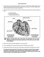 Heart Dissection Worksheet