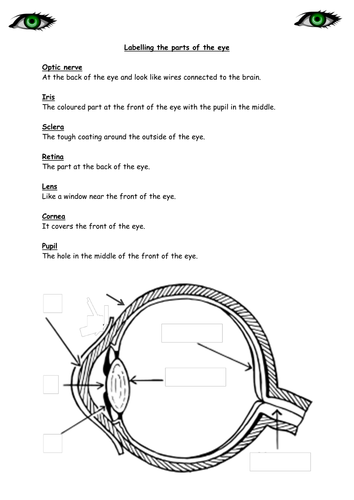 The human eye primary science worksheets