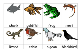 KS1 Animals Including Humans Unit - Animals Herbivore Humans Senses Year 1  2 | Teaching Resources