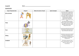 Joints of the Body and Synovial Joints