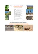 Desert-sheet-2.docx