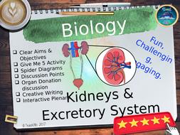 The-Excretory-System-TES.pptx