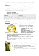 3.3.6---Adaptations-of-Plants-to-The-Availability-of-Water.docx