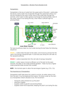 3.3.4---Transpiration.docx