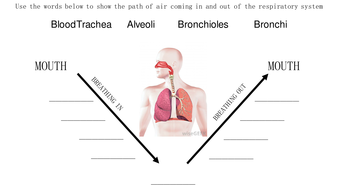 Structures and functions of respiratory system by emilypos path of air during breathingpptx ccuart Image collections
