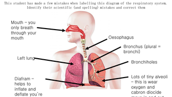 Structures and functions of respiratory system by emilypos respiratory diagram mistakespptx ccuart Image collections