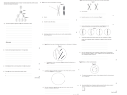 Meiosis and mitosis summary by kelly210188 - Teaching Resources - Tes