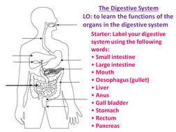 digestive diagram non label swine digestive diagram new aqa gcse biology digestive system by biologyrk | teaching resources #8