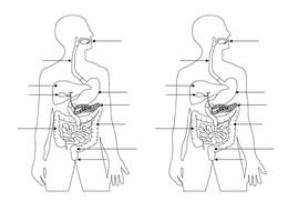 New AQA GCSE Biology Digestive System by biologyrk