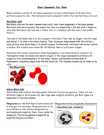 FLIPPED-HOMEWORK-TASK-Blood-Components-Fact-Sheet.doc