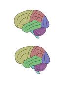 NEW GCSE AQA B10 The human nervous system | Teaching Resources