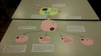 Cell-mediated-immunity-model.jpg