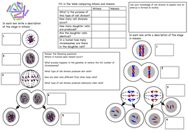 Cell division GCSE revision worksheet by deb1977