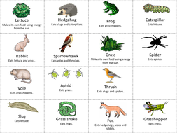 food-webs-card-sort-or-cut-and-stick.pptx