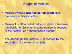 meiosis and crossing over