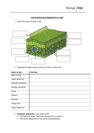 Leaft-structure-adaptations-worksheet-H.doc