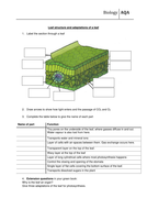 Leaf structure and function worksheet new AQA