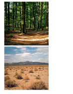 activity-mat-cards-for-habitats.pdf
