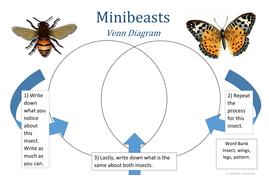 Minibeast Venn Diagram 2