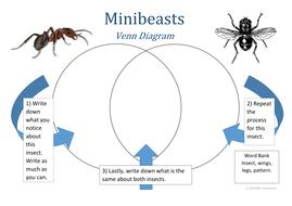 Minibeast Venn Diagram 3