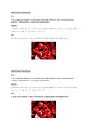Magnification-worksheet.docx