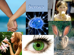 Nervous-system-and-eye.pptx
