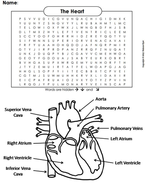 The Heart and Circulatory System Word Search