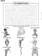 Skeletal-System-Word-Search.pdf