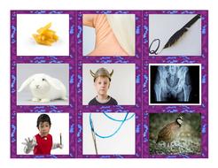 Phonics-Consonant-Letters-m-n-q-r-v-x-Photo-Card-Game.pdf