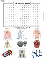 Immune-System-Word-Search.pdf