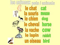 22-ANIMALS---PETS.pptx