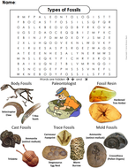 Fossils-Word-Search.pdf