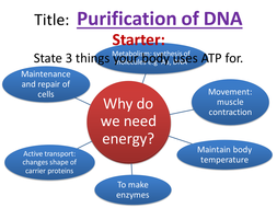 (5)-Purification-of-DNA.pptx