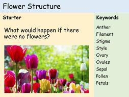 KS3 Plants - Lesson 2 - Structure of a Flower.pptx