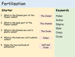 KS3 Plants - Lesson 4 - Fertilisation.pptx