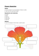 Flower-dissection-and-structure-worksheet.doc