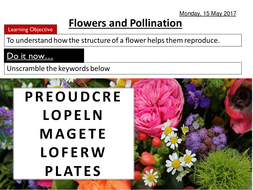 Flowers-and-pollination.pptx